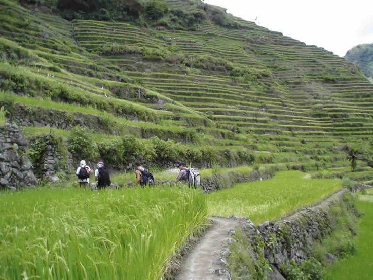 Trekking en Terrazas de arroz de Banaue Filipinas