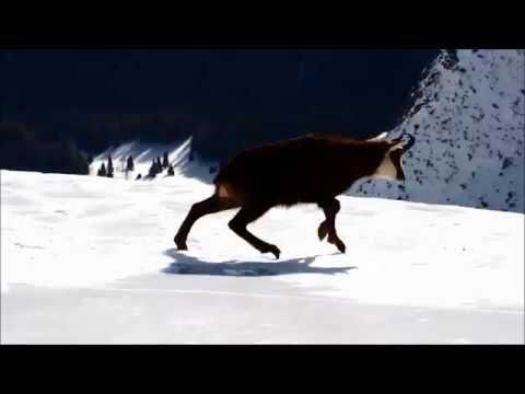 Kozica na lodzie