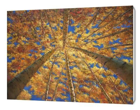 """Colorado Fine art giclée print of """"Ascension"""" by artist Johnathan Harris. Aspen forest in the Rocky Mountains of Colorado near Breckenridge in the fall."""