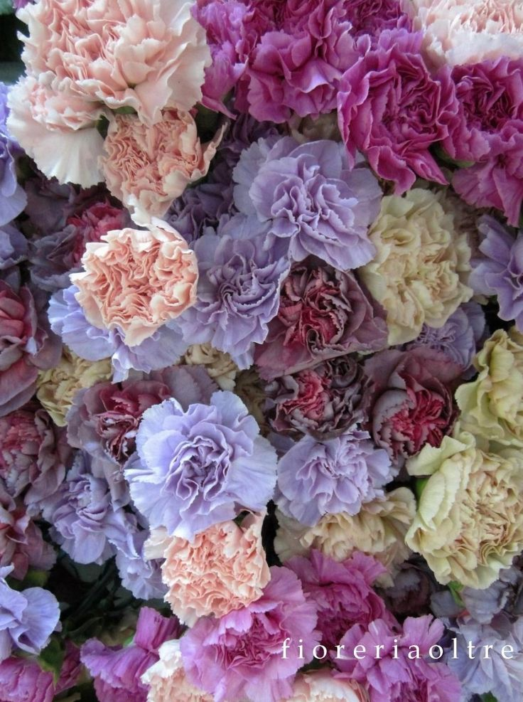 Fioreria Oltre/ Mixed carnations