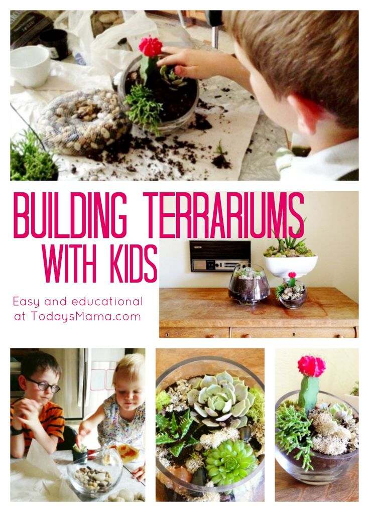 "Build Terrariums! You won't have to find a ""special"" place for them when you're done; they actually look beautiful. :)"