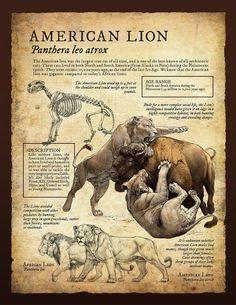American Lion | Panthera leo atrox by Beth Zaiken