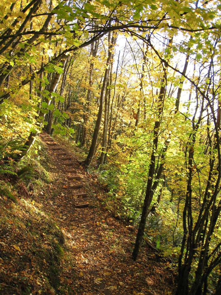 Hiking up Mt Thom in fall. This trail offers great views of the #Chilliwack Valley-photo by marilyn #hiking #view