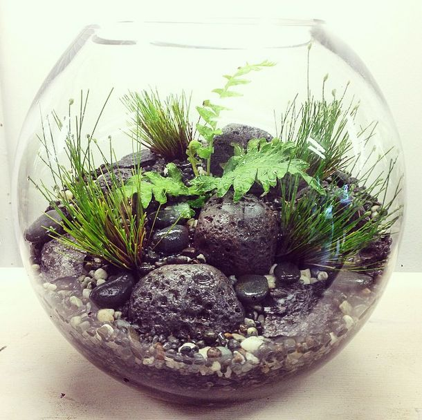 A Stoney Slice Of New Zealand River Edge Terrarium By Bioattic