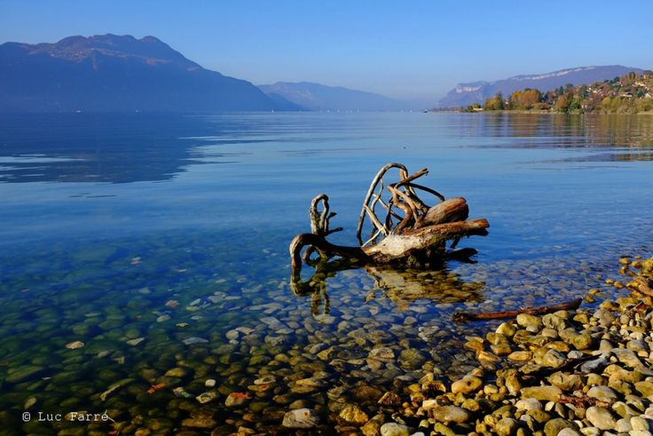 Souche sur  le lac...Le Bourget