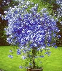 a 17 legjobb ötlet a következőről: winterharte pflanzen a, Garten Ideen