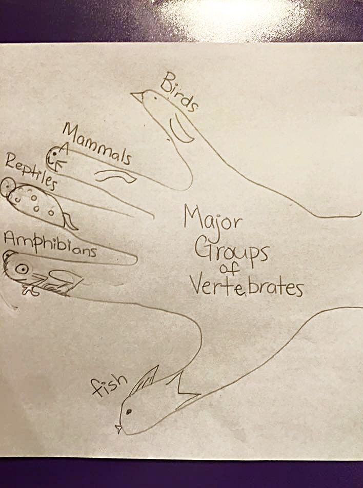Sketching activity for Cycle 1 Week 6 Science Major Groups of Vertebrates