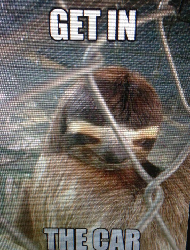 Creepy sloth | Sloth meme funny, Sloths funny, Sloth meme