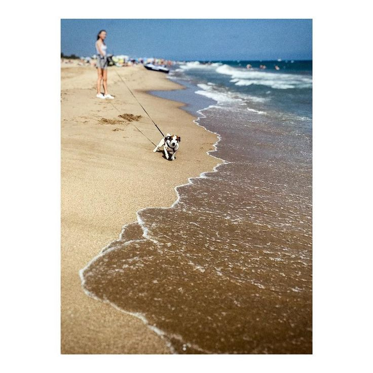Imarchi    A dog lurking on the beach _ Perro acechando en la playa   #playa #ocean #seaside #sand #walk #seascape #mar #walking #beachlife #coast #plage #sol #seaview #seashore #dogoftheday #oceano #doglover #praia #arena #petstagram #pets #puppylove #puppies #ripples #imarchi #mobilephotography    See it in Instagram http://ift.tt/2uHxDdG imarchi imarchi.com photographer fotografo Madrid Spain photography Phoneography iPhoneograp imarchi imarchi.com photographer fotografo Madrid Spain…