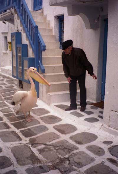 Le pélican de Mykonos