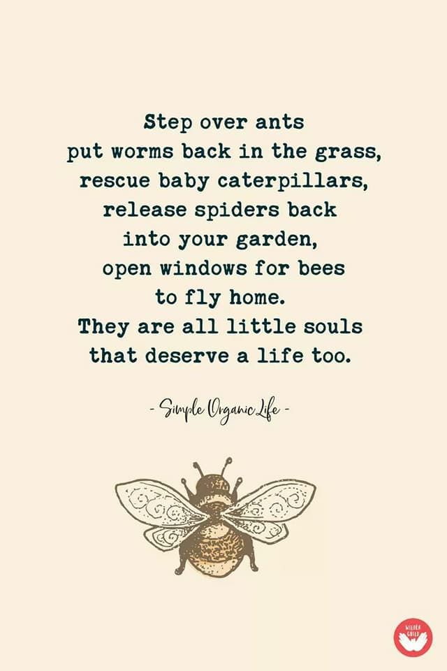 treat every living thing with love | Bees | Nature quotes