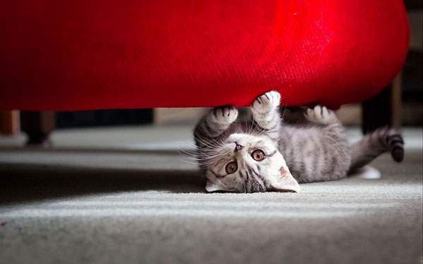 赤いソファーの猫
