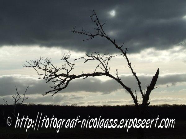 Nicolaas/S startte met fotograferen op zijn 12e. In zijn werk is iets desolaats met een zwarte achtergrond terug te vinden. Nauwelijks herkenbare modellen, vervreemd en met afwijkende kleuren. Ook het strand is in zijn werk vaak terug te vinden in een meestal verlaten setting. Zie ook http://www.em-ha-em-art-productions.nl/mainport/foto/nicolaass/