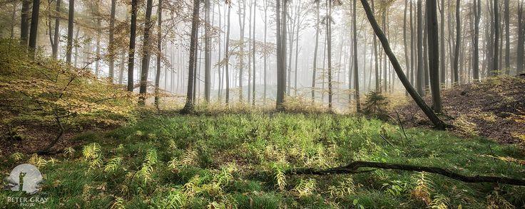 Ferns - Warmia, 2012