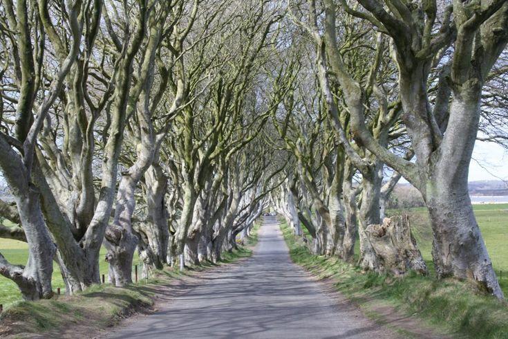 game of thones locations dark hedges