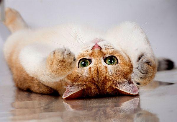 jolie chatte femme rueil malmaison