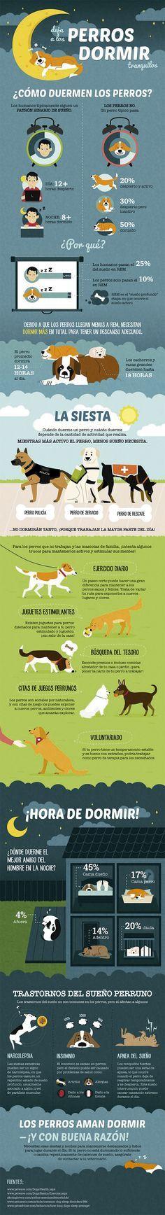 Algunos datos acerca del sueño de los perros que deberías saber