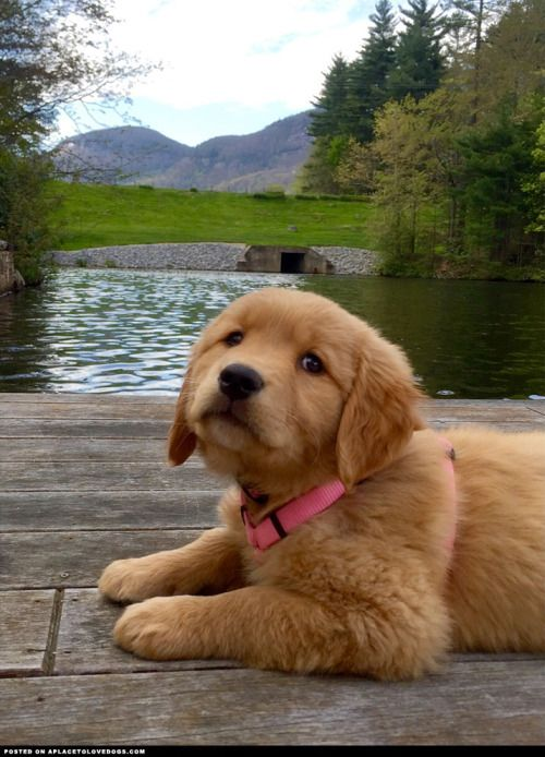 Adorable puppy wants to know if she can swim now please? Only...