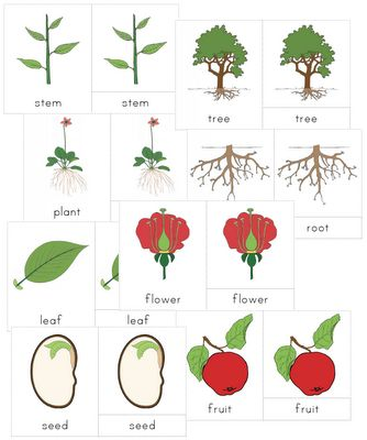 The Helpful Garden: Montessori Botany Nomenclature Set For Primary 3-6 years
