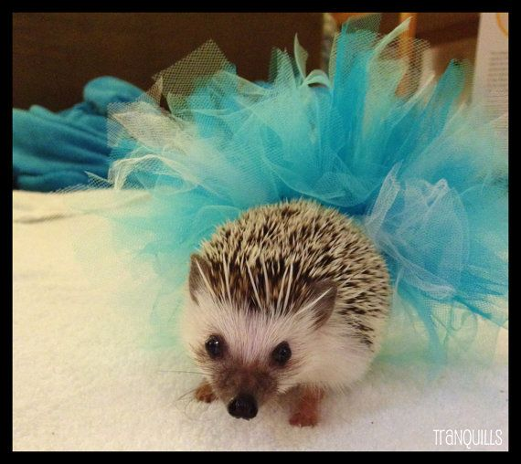 insanely cute hedgehog tutus available from tranquills on Etsy