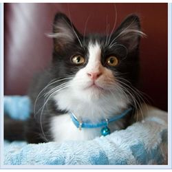 Wet Nose Cat Adoptions
