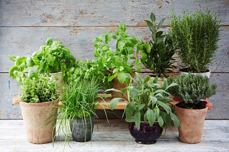 Vyberte si bylinky, které máte nejraději - pěstování je snadné!