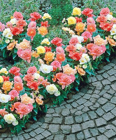Best 25 spring hill nursery ideas on pinterest flower for Spring hill nursery garden designs