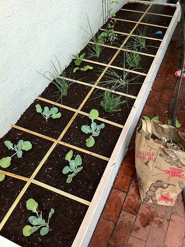 17 Best Images About Square Foot Gardening On Pinterest