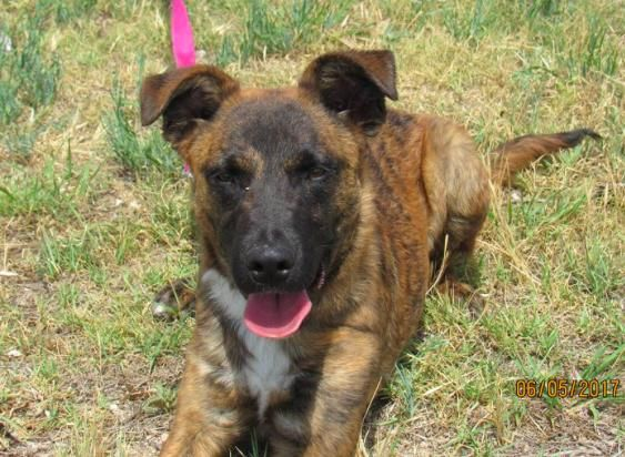 Rescue Dogs For Adoption In Colorado Springs