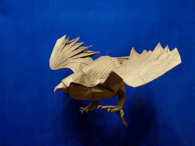 Seth Friedman  Origami Cooper U0026 39 S Hawk