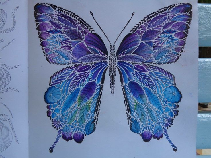 Coloring Books Colouring Especially Dragonflies Tropical Butterfly Colors