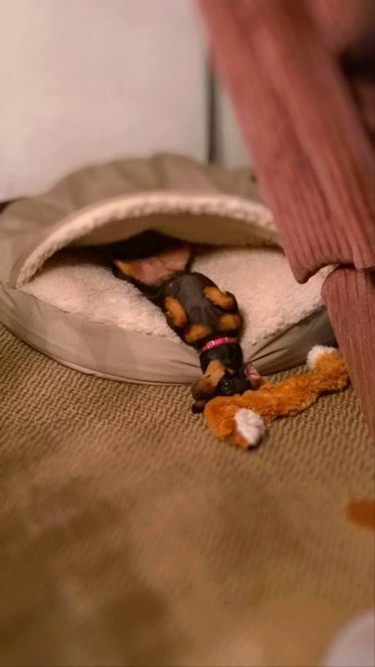 min pin sleeping.