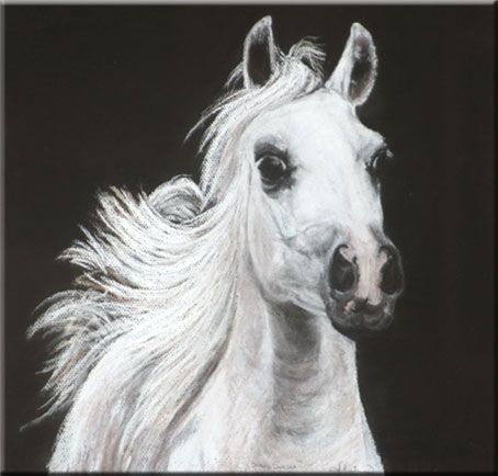 Stavs sorsha straight egyptian mare portrait by amber martin