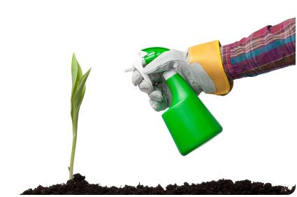 Chemical Free Garden Solution  Simple Pesticide:   ■1 minced garlic clove.   ■1 cup warm water.   ■3-4 drops of dish soap.     Mix the three ingredients together and pour into a labeled spray bottle. Spray generously on plants, both edible and non edible. Bugs will leave your plants alone.