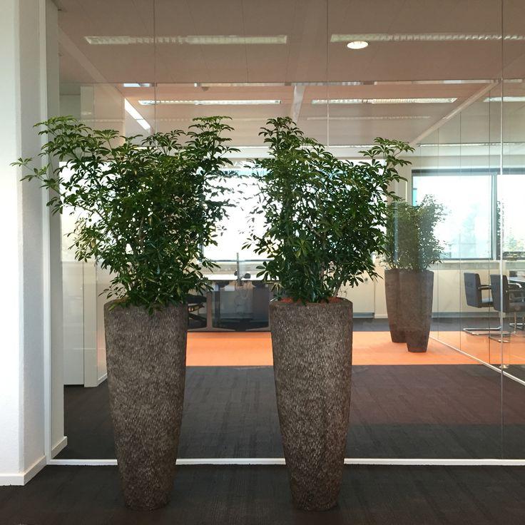 Polyatone rock vazen met interieurbeplanting.