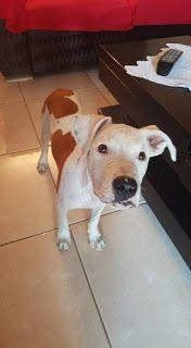 Χάθηκε 1/9/2015 5μηνων θηλυκό σκυλάκι από Εύοσμο, Θεσσαλονίκη. Ακουει στο όνομα Ariel...