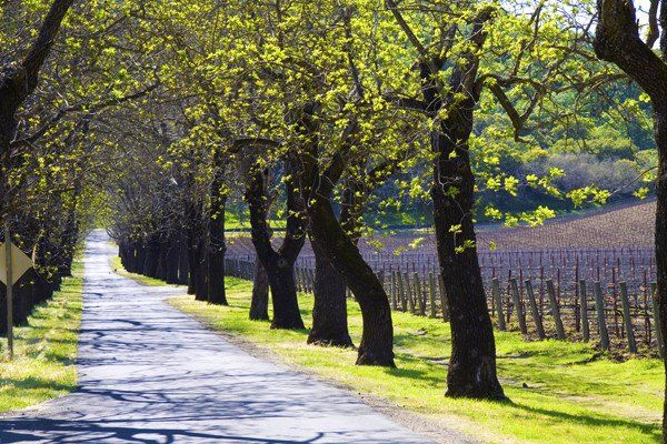 16 best images about napa valley wineries on pinterest for Best time to visit napa valley wine country
