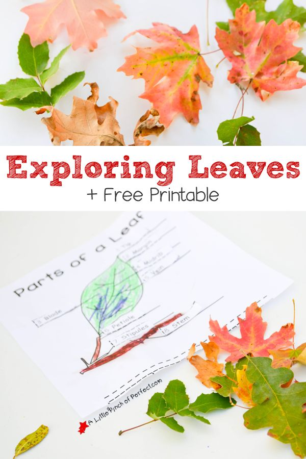 learning about leaves explore color and label free printable for kids