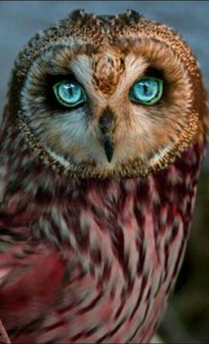 Les 102 meilleures images du tableau animaux sur Pinterest ...