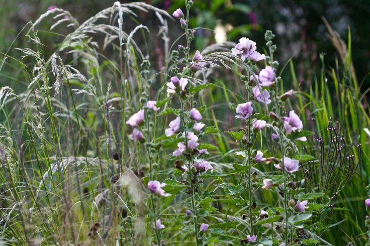 Img 6629 jardin naturaliste pinterest for 6 jardin guillaume bouzignac