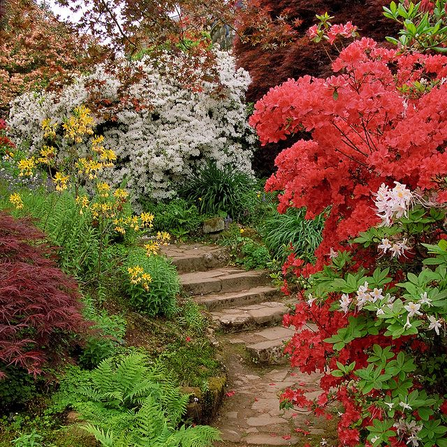 Scotney Castle Landscape Gardens, Kent, UK   Colorful azaleas line a shaded path in Spring (2 of 16) by ukgardenphotos, via Flickr