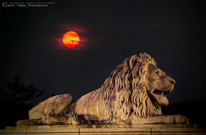 Great Buda Castle Lion