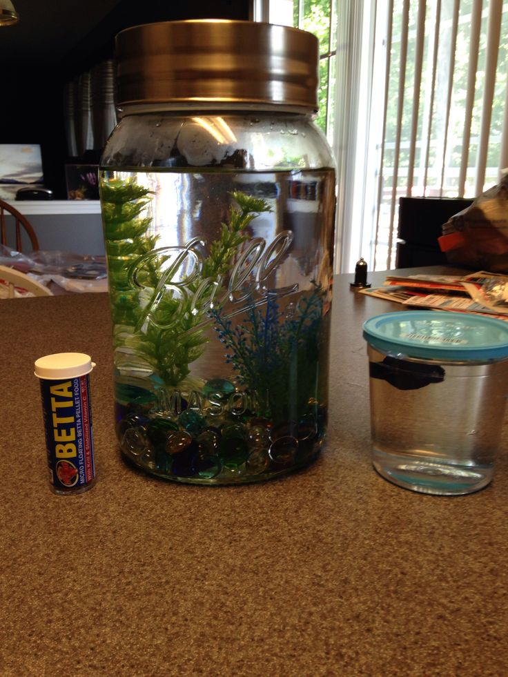 358 best images about insanely cool fish tanks on for Fish in a jar