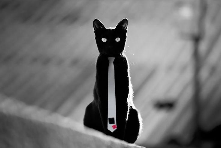 #blackcat wearing a #necktie
