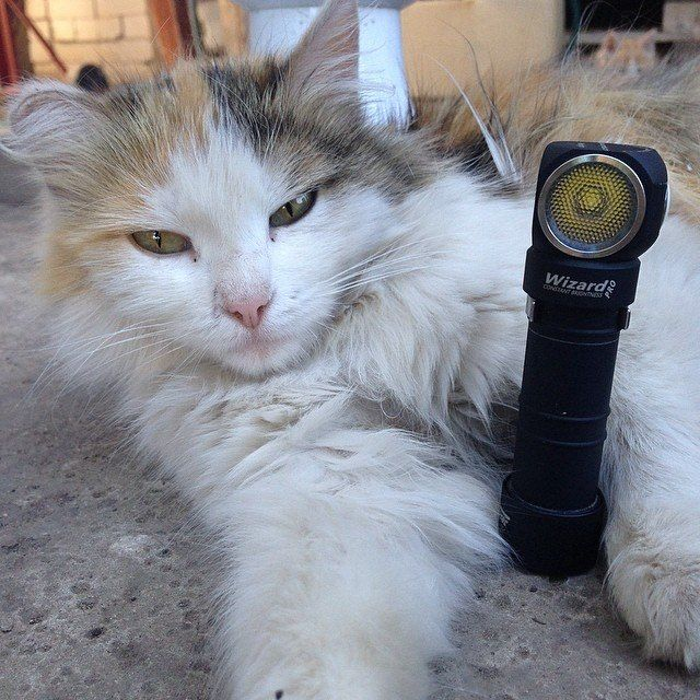 Cats know how to use flashlights! :) http://instagram.com/p/otCEq_hSKE/