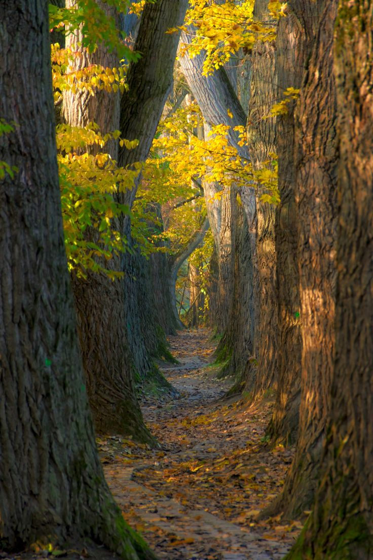 """small path on the """"oberer Wöhrd"""" in Ratisbon, Bavaria, hidden between the """"Wöhrdbad"""" and the """"Dultplatz"""" by Tobias Becq on 500px. Trees Autumn Nature Paths"""