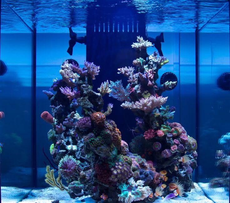 Saltwater Aquarium Aquascape: 17 Best Images About Zee Aquarium On Pinterest