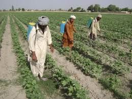 FARMERS OF PAKISTAN or FARMING IN PAKISTAN            Introduction. Pakistan an agriculture country and agriculture is the backbone of Pakistan. 75% population of Pakistan are living in the rural areas and depend upon agriculture. Farmers play a vital role in Pakistan agriculture sector as well as its economy. Farmer community is very important for prosperity and success of Pakistan.    http://persianpast.com/farmers-of-pakistan-or-farming-in-pakistan/