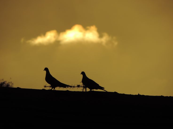 Pigeons on a roof at sunset