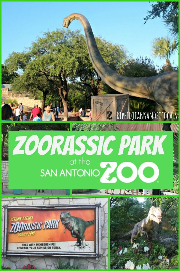 Zoorassic Park And Other Summer Fun At The San Antonio Zoo San Antonio Zoo Family Vacation Travel Family Vacations In Texas